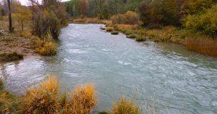 El coto intensivo La Torre en el río Júcar retoma su actividad el 23 de marzo