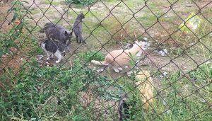 La Mancomunidad Vega del Henares acerca la realidad de las colonias felinas a la población con un encuentro abierto en Cabanillas
