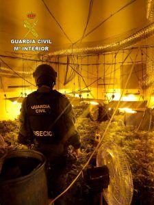 La Guardia Civil desmantela una macro plantación de marihuana en un garaje de Pioz