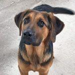 La Policía Local de Cabanillas inicia una campaña de control a dueños de animales que los pasean sueltos