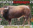 Galápagos inaugura la temporada de encierros por el campo el sábado 20 de julio