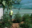 La Guardia Civil de Cuenca detiene a dos personas e investiga a otra por cultivo de drogas en las inmediaciones de la localidad de Arcas