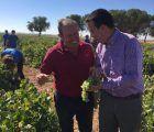 Martínez Arroyo prevé una vendimia de entre 20 y 23 millones de hectolitros en Castilla-La Mancha con una uva de mayor grado alcohólico