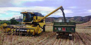 Asaja Cuenca alerta del grave riesgo que corre el cultivo del girasol por la falta de rentabilidad y los bajos precios