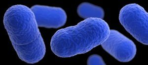 La carne que comieron tres posibles afectados por listeriosis en Cuenca da positivo