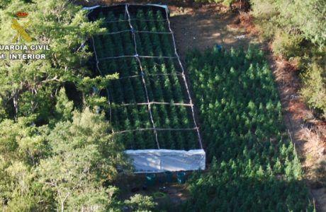 La Guardia Civil desmantela, en una espectacular operación, una plantación de marihuana en el Parque Natural de la Sierra de Norte de Guadalajara