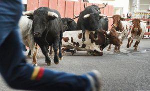 Ningún herido en el primer encierro taurino de las Ferias y Fiestas de Guadalajara