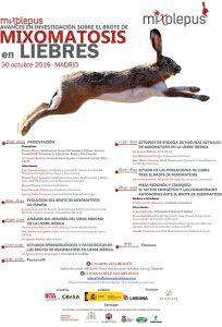 La RFEC vuelve a suspender la caza de la liebre en todos sus campeonatos por un repunte de la mixomatosis