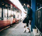 Cinco consejos de Omio para viajar en tren con amigos de cuatro patas