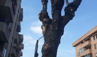 Ecologistas en Acción denuncia que Guadalajara continúa con las podas indiscriminadas que dañan el arbolado urbano