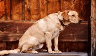 El 39,3% de las Casas Rurales en España admiten mascotas