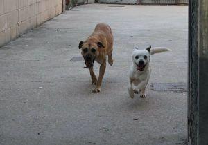 Se muda a una casa nueva y abandona a su perro en una vivienda de la Cuesta de Dávalos, en Guadalajara