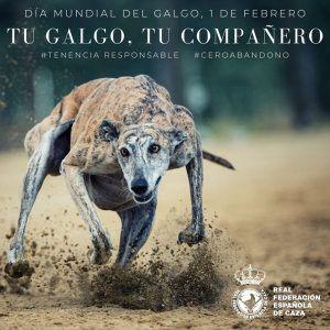 La RFEC pone en evidencia la falsedad de las cifras sobre abandono de galgos dadas por los animalistas