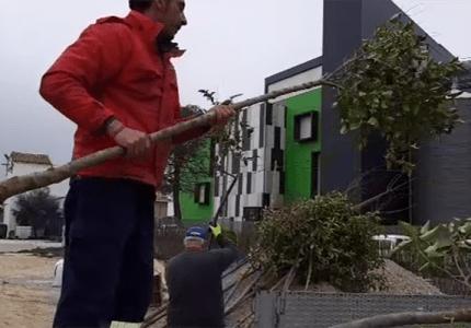 La Diputación de Guadalajara reparte cerca de 3.000 árboles para plantar en sus pueblos