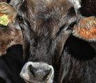 Unión de Uniones denuncia que las indemnizaciones por sacrificios sanitarios ganaderos llevan sin actualizarse 9 años