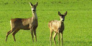 El Campus de Cuenca acogerá el Congreso Internacional de Salud y Conservación de Fauna Silvestre