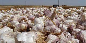 Conformada una bolsa de empleo de más de 5.600 personas inscritas para trabajar en las campañas agrícolas de Castilla-La Mancha