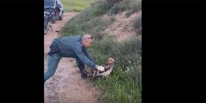 Rescatan en Guadalajara un águila calzada herida