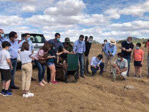 La Junta finaliza la campaña de refuerzo de poblaciones de lince ibérico en la región liberando al medio natural el décimo ejemplar en los Montes de Toledo