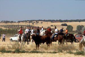 Los ganaderos de reses bravas de Guadalajara llaman a la prudencia a ayuntamientos, comisiones y peñas taurinas