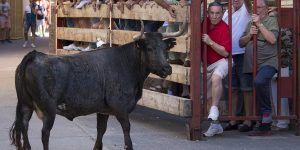 este fin de semana cubrimos los festejos taurinos populares de mallen | Liberal de Castilla