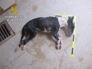 La Guardia Civil investiga a una persona en Brihuega por dejar morir a su perro de hambre