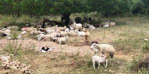 Agricultores y ganaderos de zonas de montaña o con limitaciones naturales de Guadalajara reciben cerca de tres millones de euros