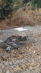 Ecologistas en Acción denuncia el acoso sistemático a las colonias felinas controladas por la Asociación Protectora de Animales de Sotolargo