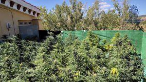 Un detenido por tener una plantación de marihuana en una azotea de Cuenca