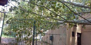 Cae un árbol en el Parque de las Eras del Agua de Brihuega justo después de que los niños saliesen de la guardería