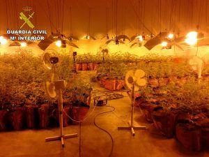 La Guardia Civil detiene a cuatro personas por cultivar marihuana en Marchamalo se han incautado 782 plantas