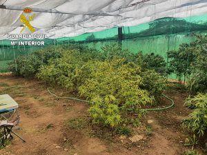 La Guardia Civil investiga a dos personas por tener 25 plantas de marihuana en un cultivo indoor en la mancha conquense