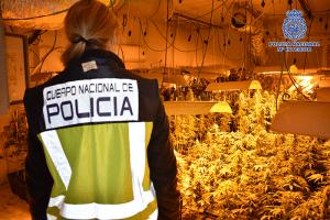 La Policía Nacional desarticula en Torrejón del Rey y Galápagos una organización criminal dedicada al cultivo y distribución de cannabis