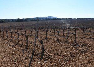 El Gobierno regional abona más de 33 millones de euros en ayudas de la PAC en la provincia de Cuenca