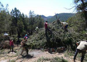 Más de 50 personas participan en la restauración de un chozón sabinero en el Alto Tajo