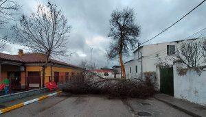 El viento del nuevo temporal azota Cuenca