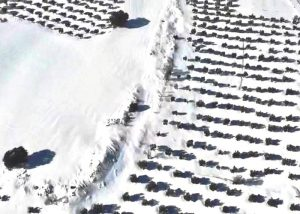 Imagen aérea de olivar Villalba del Rey
