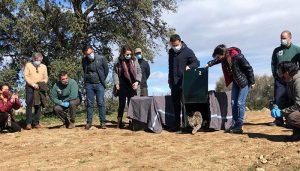 Balance positivo de la situación del 'lince ibérico' en la región con un total de 146 cachorros de la especie nacidos en libertad durante 2020