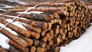 Cuenca en Marcha pide una comisión de investigación sobre la posible tala irregular de árboles en la Serranía
