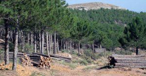 El Gobierno de Castilla-La Mancha destinará este año 2,9 millones de euros a tratamientos selvícolas para prevenir incendios forestales