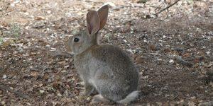 Escudero aboga por abordar de forma multidisciplinar la solución a la problemática de los daños por conejo de monte a los cultivos agrícolas