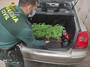 La Guardia Civil investiga a una persona en Trijueque por cultivo de marihuana