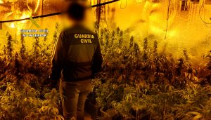 La Guardia Civil desmantela dos plantaciones de marihuana en Galápagos y en El Casar