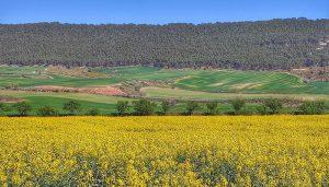 Castilla-La Mancha abona hoy más de 3,6 millones en ayudas de la PAC para agricultores y ganaderos de Guadalajara