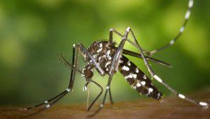 El Ayuntamiento de Cabanillas inicia los tratamientos preventivos contra la proliferación de mosquitos
