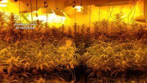 """La Guardia Civil desmantela una plantación """"indoor"""" con 512 plantas de marihuana en Horcajo de Santiago"""