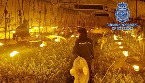 """La Policía Nacional desmantela la mayor plantación """"indoor"""" de cultivo ilegal de marihuana en la ciudad de Guadalajara"""