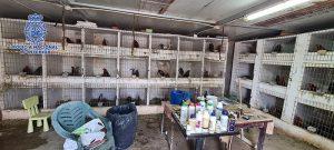 Desarticulada una organización criminal con ramificaciones en El Casar dedicada a la distribución de cocaína y a la realización de peleas ilegales de gallos
