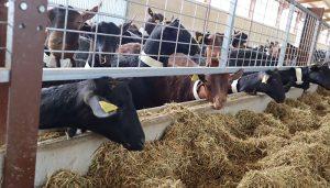 El Gobierno regional abona alrededor de seis millones de euros en ayudas a la agricultura ecológica y al fomento del pastoreo en la provincia de Cuenca