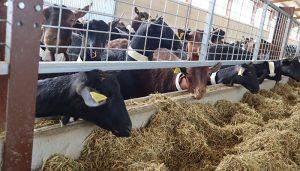 El Gobierno regional abona más de 2,2 millones de euros en ayudas agroambientales para la agricultura y ganadería ecológica de la provincia de Guadalajara